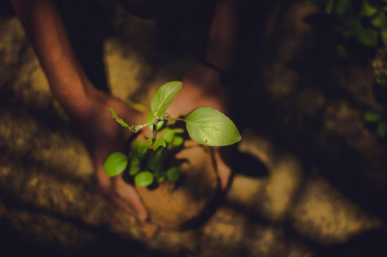 bambook reforestation project