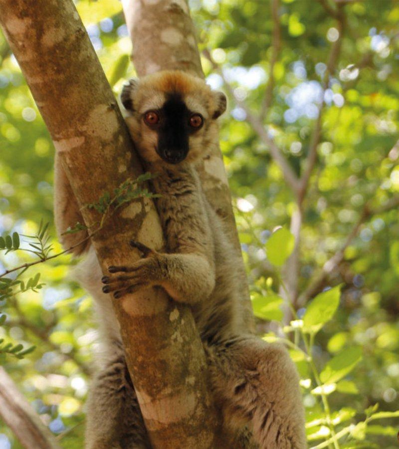 Animal Habitat Madagascar