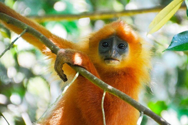 bambook aap